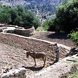 Sataf biblical terrace farm outside Jerusalem