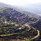 Biblical terraces in the Judean Hills near Jerusalem