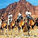Camel riding to St. Catherine's monastery and Mount Sinai