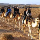 Negev desert camel trekking in footsteps of Israelites & Exodus