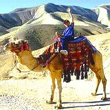 Camel riding in the Negev desert