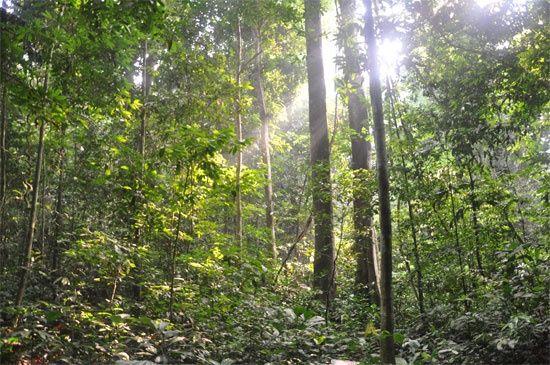 Jungle Land for Sale