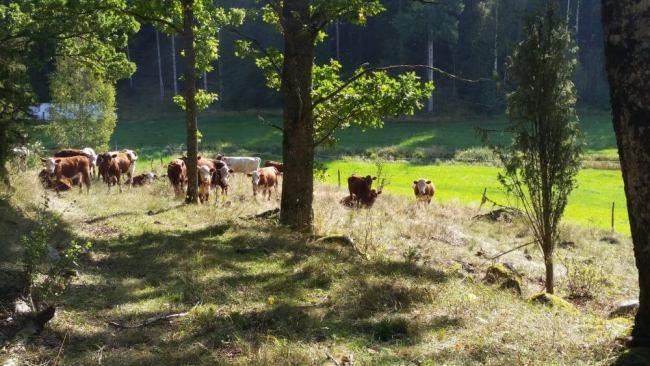 Ekologiskt jordbruk