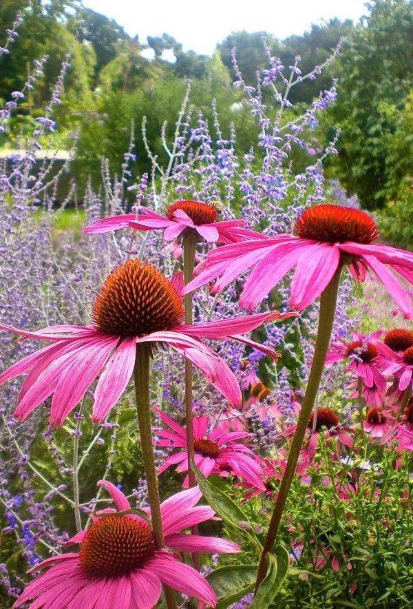 Perennial Flowers for a Stunning Design
