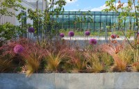 Stockwell Street - University of Greenwich Green Roof ...