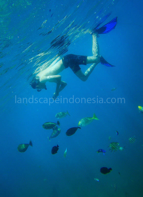 lombok barat 60 - My Path to Become Dive Master