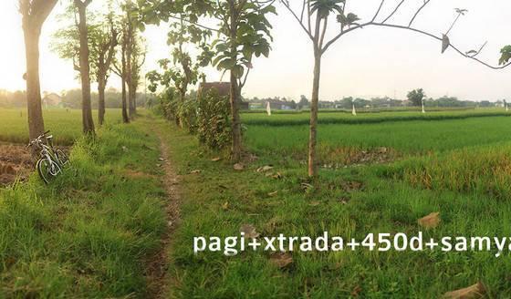 pagi extrada 1 - Pagi+xtrada+450D+samyang35