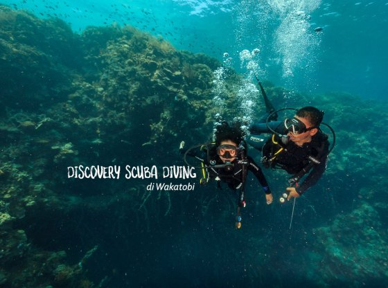 diving di wakatobi 0 - Discovery Scuba Diving di Wakatobi