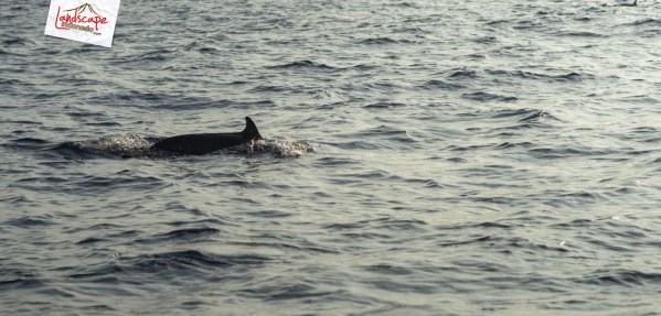 "lumba lumba mola wakatobi 10 - ""Berburu"" Lumba Lumba di Bajo Mola"