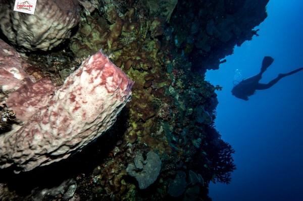 manado olympus 01 1024x680 - Memilih Kamera Underwater | Underwater Photo Journey