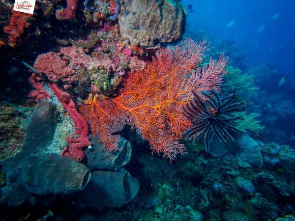 manado olympus 03 1024x768 - Memilih Kamera Underwater | Underwater Photo Journey