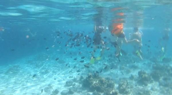 Screenshot 182 - Komodo | 3D2N | Snorkel trip