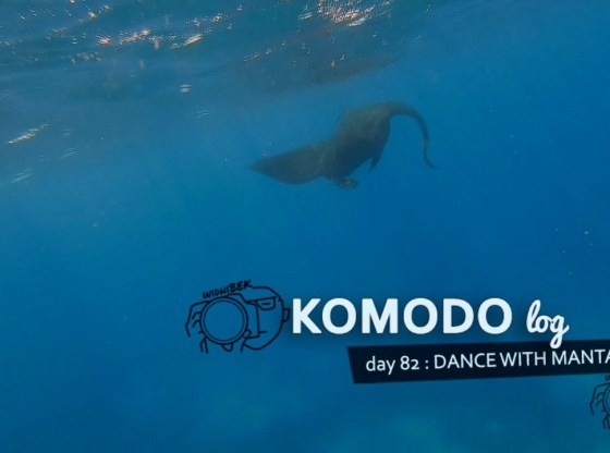 komodo manta ray 82 01 - Komodo day 82 : Dance with Manta