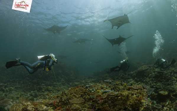 komodo 100 mantaalley 11 - Komodo Diving Log Day 100 : Ocean Full of Manta