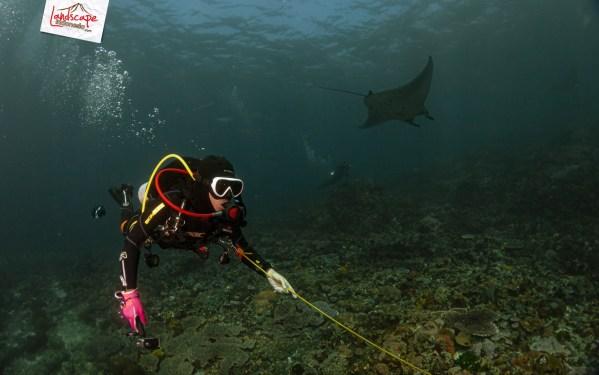 komodo 100 mantaalley 12 - Komodo Diving Log Day 100 : Ocean Full of Manta