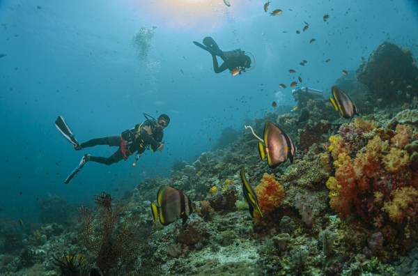 komodo 101 12 1024x675 - Test Samyang 14mm vs Samyang Fisheye 8mm Untuk Underwater