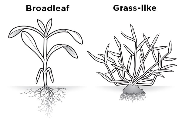 How to ID weeds : Landscape Management