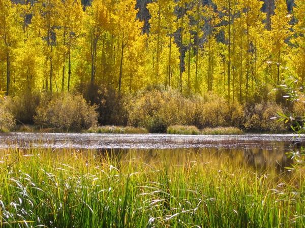 TahoeAspen