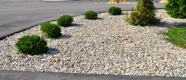 grass alternatives yard landscaping