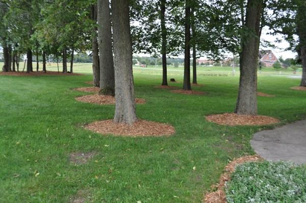 cypress mulch indianapolis