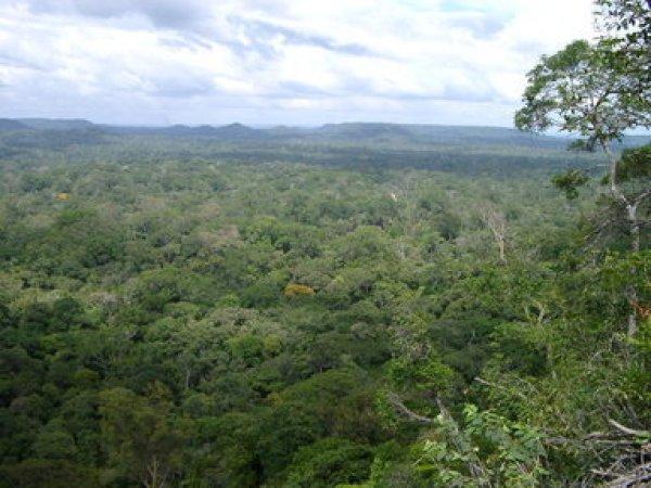 natural_forest_for_timber_production_at_jari_florestal_brazil-Sabogal