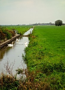 Bucolic Woerden with the ever-present swans