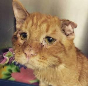 El gato más triste del mundo vive su propio cuento de hadas