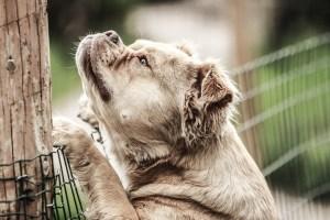 (VIDEO) Rescatan a un perro que durante 10 días estuvo atrapado en un pozo de 70 metros