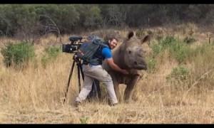 El video de un rinoceronte que ha conmovido a todos en las redes sociales
