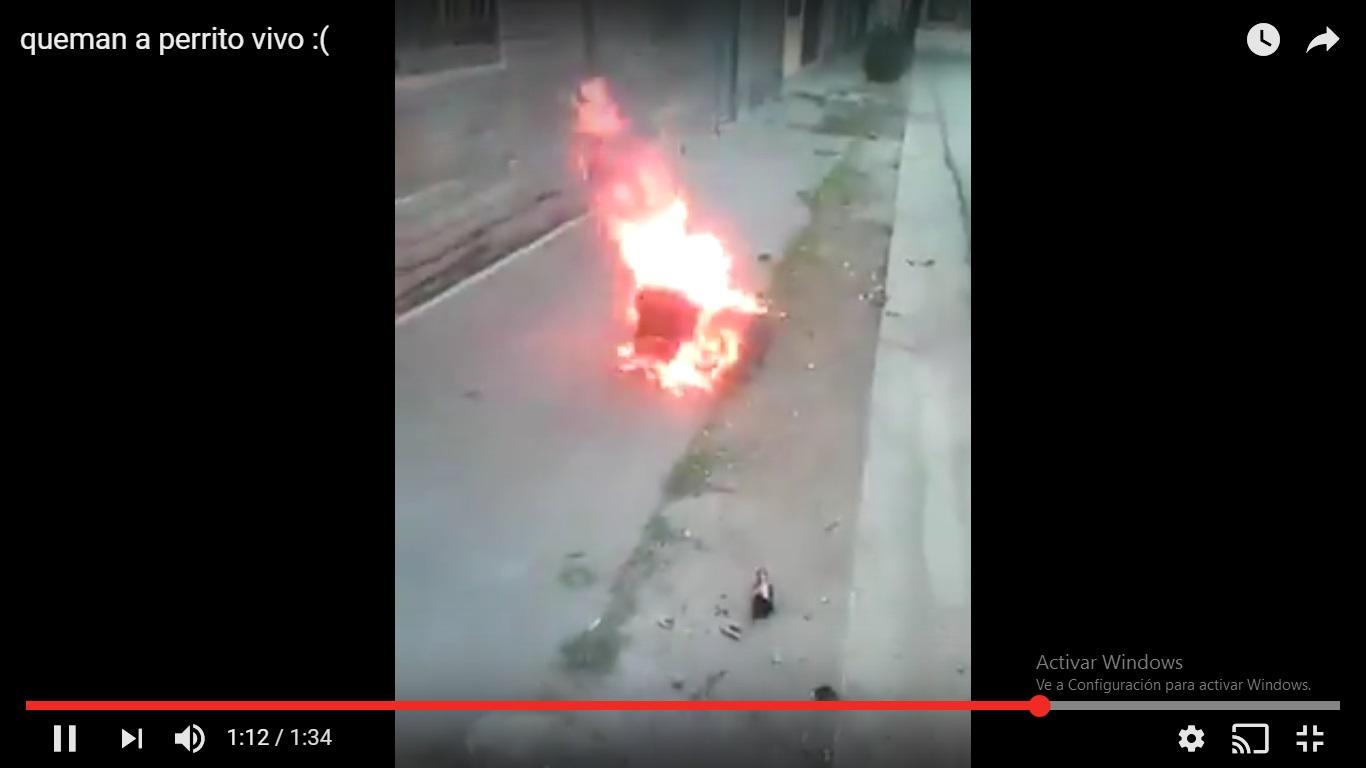 Indignante, en Cuba, adolecentes queman vivo a un perro y se burlan (Video)