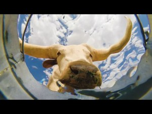 Vídeo: Deja una cámara en un cubo de agua en el desierto, descubre aquí lo que graba