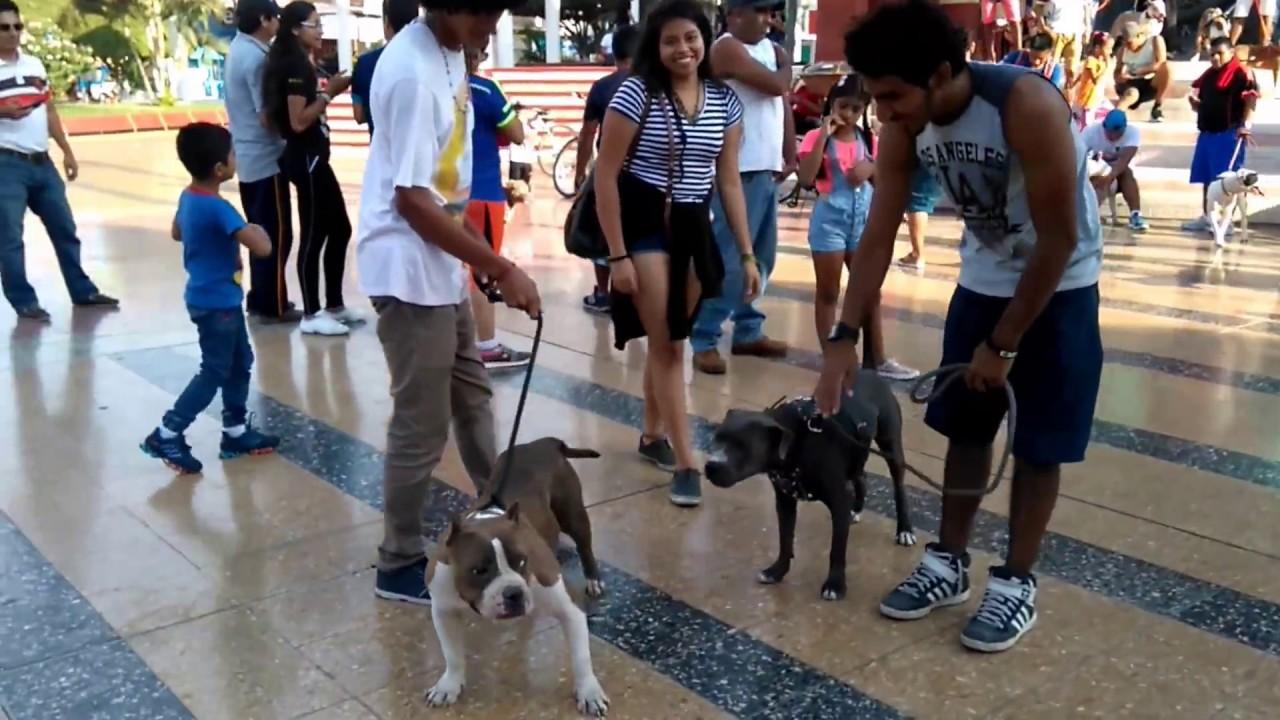 Realizan quinta marcha en apoyo a pitbulls