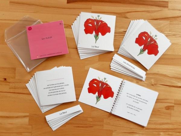 Nomenclatures botanique Montessori 6-12 ans