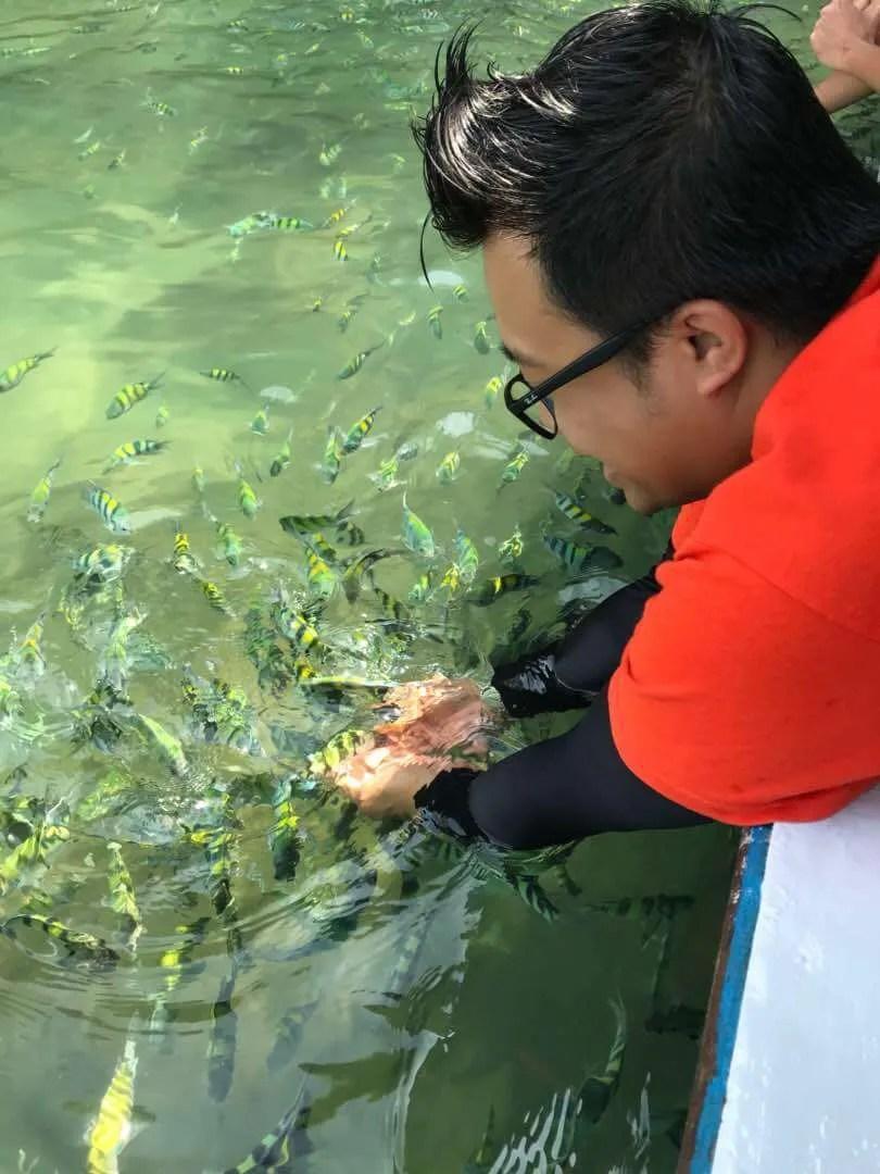 Langkawi Mangrove Tour Fish Feeding