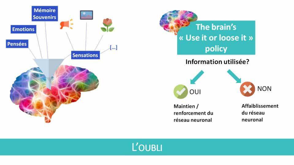 L'oubli, autre facette de la neuroplasticité du cerveau