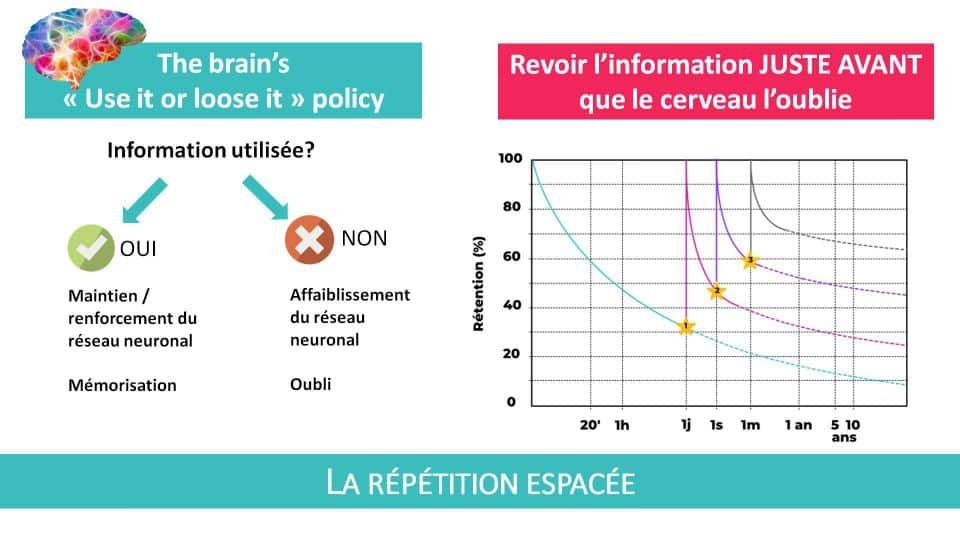 La force de la répétition espacée : revoir l'information juste avant que le cerveau l'oublie!