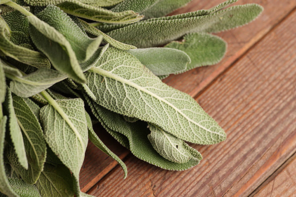 Sage Herbs Health Benefits