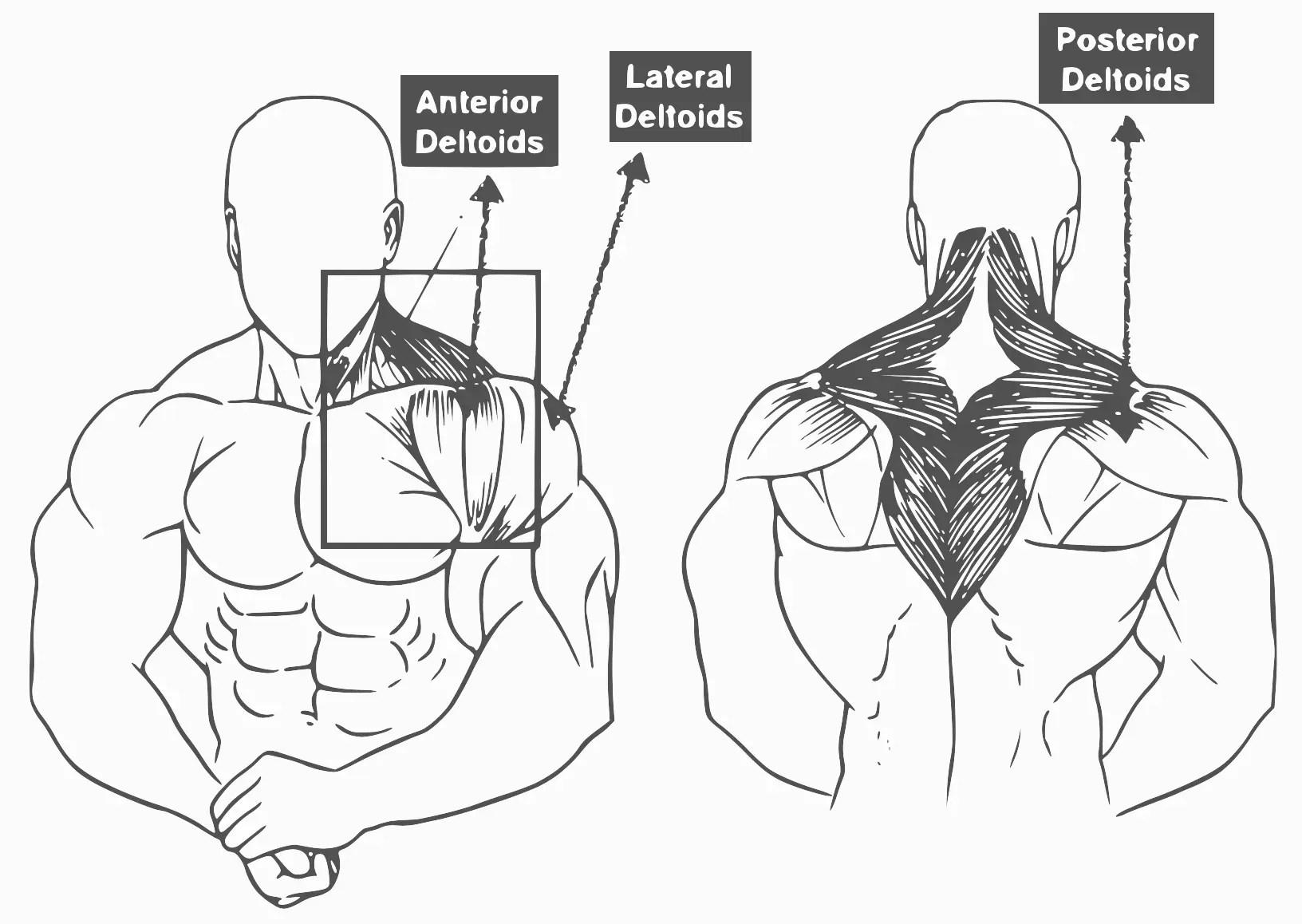 10 Best Shoulder Exercise For Muscle