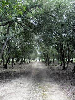 Una passeggiata a… Bosco di Baulì
