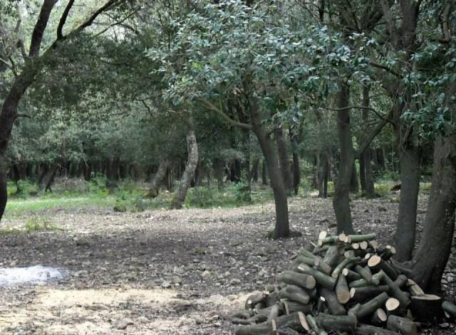 cura del bosco