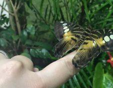 La casa delle farfalle a Siracusa