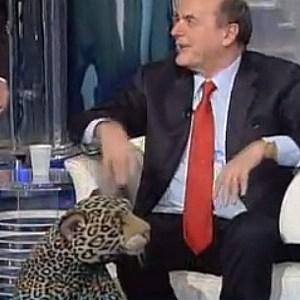 bersani giaguaro porta a porta