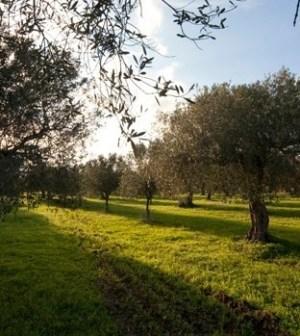 foto Linea Verde Orizzonti