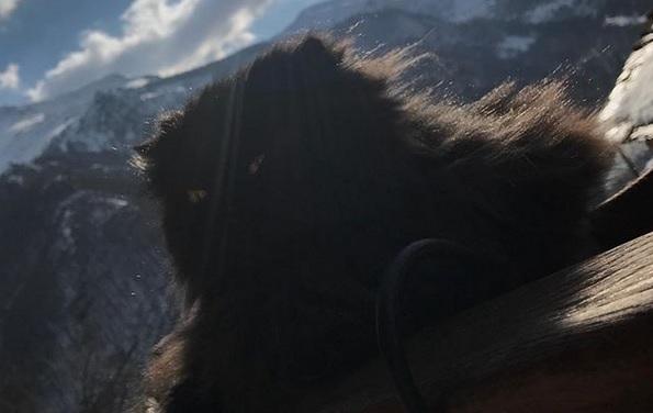 foto gatto Elisa Isoardi