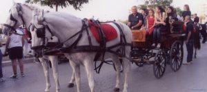 Sfilata Cavalli
