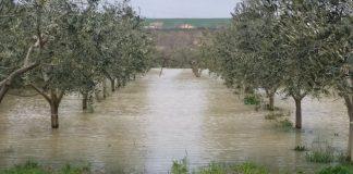 agricoltura terra