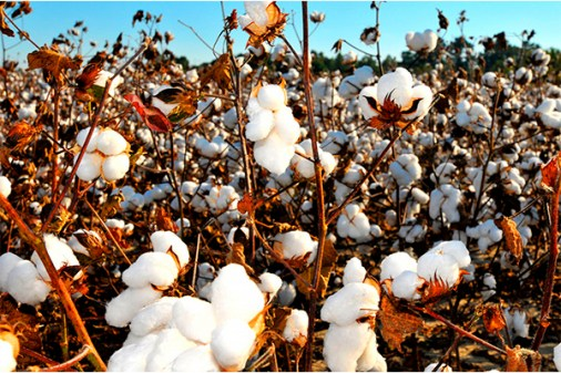 kvety z organickej bavlny