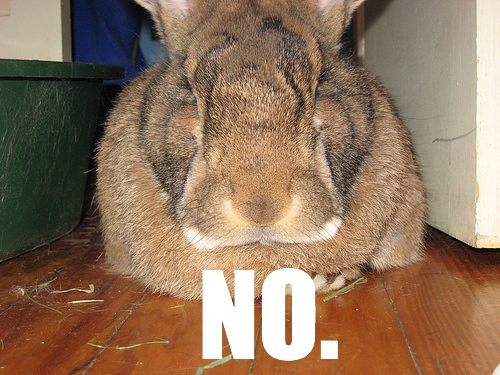 "My rabbit Stephen saying ""No."""