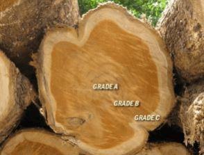 perbedaan Grade pada kayu Jati