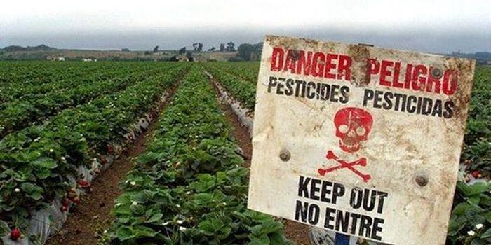 Bayer e Monsanto: dal matrimonio tra le due peggiori multinazionali cosa può nascere?